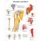 Shoulder and Elbow, 1001482 [VR1170L], Csontrendszer