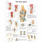 The Knee Joint,VR1174UU