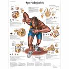 Sports Injuries, 1001494 [VR1188L], Izom