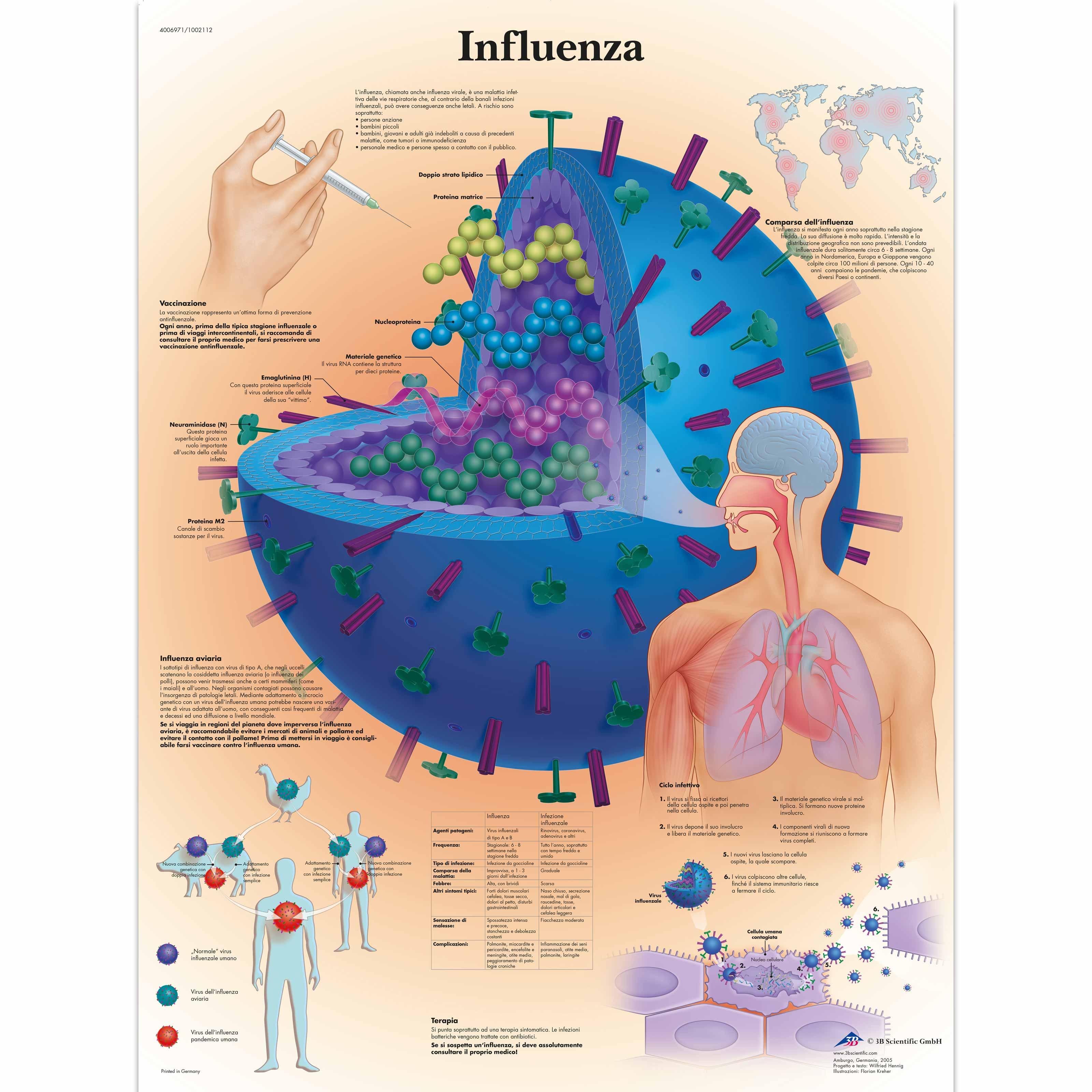 Miért paraziták a vírusok, Baktérium, vírus, parazita - mi a különbség?